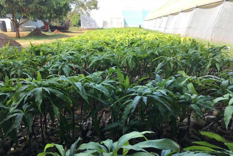 Establishment of Horticultural Crop CoEs in Karnataka State